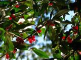 more berries.jpg