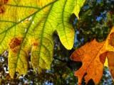 Just Leaves.jpg