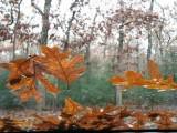 Leaves on my Windshield.jpg