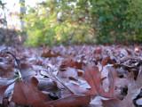 Leaf Blower or Rake.jpg