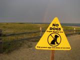 No Bird Dogs.jpg