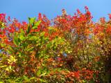 Colours of Autumn.jpg