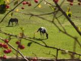 December and still grazing.jpg