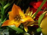 Spring Colors - Coming Soon .jpg