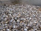 Scallop Beach.jpg