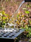 Aquinnahs ever flowing spring water.jpg