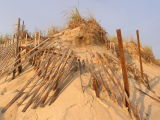 This dune protected by Acme Dune Fence Co.jpg