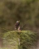 Circle B Meadowlark on Eagle Roost Way.jpg