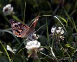 Butterfly at Circle B.jpg