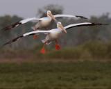 Two Pelicans Landing.jpg