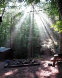 Sun Rays Through the Trees.jpg