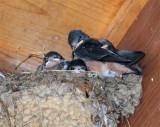 Swallow Nest.jpg