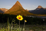 Mountain with Flower.jpg