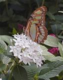 Butterfly on flower 3.jpg