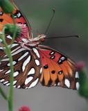 Butterfly feeding.jpg