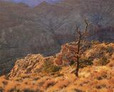 Canyon Sunset on Dead tree.jpg