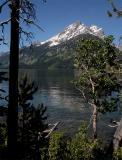 Tetons at Jenny Lake between the trees.jpg