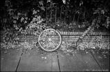Bike's weel