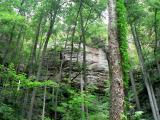 Daniel Boone Forest 3.jpg
