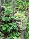 Daniel Boone Forest 4.jpg