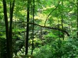 Daniel Boone Forest 5.jpg