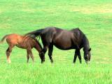 Horses 7.jpg