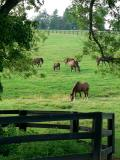 Horses 10.jpg