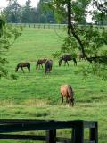 Horses 11.jpg