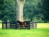 Horses 12.jpg