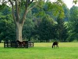 Horses 13.jpg