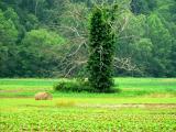 Strange Tree 2.jpg