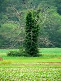 Strange Tree 3.jpg