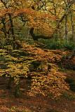 Dolfriog Woods