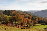 The Gwydyr Forest