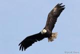 Fly Like an Eagle II