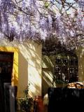 Restaurant - Spring color