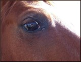 Lunch with Horses - Something for Cindi Smith