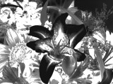Lily Negative