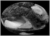 Tender Beef Fajita