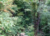 Looking Down  from Kaymoor Mine Trail