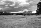 Golf Course in Black and White