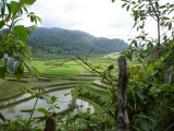Peaks and rice fields