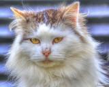 Avatar Catz