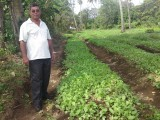 Tobacco plantation and owner