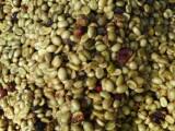 Coffee beans, Miraflor