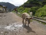 Train tracks Huancavelica