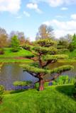 A view from Japanese garden, Chicago Botanical Garden