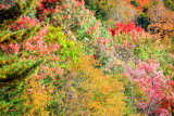Fall colors, New Hampshire, 2009, Franconia Notch State Park, NH