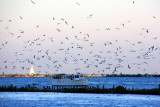 Lake Michigan and the sea gulls, Chicago