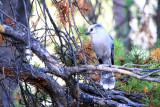 Bird  - Yellowstone National Park